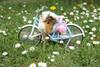 ママチャリ革命!☆最新の子育てママ用自転車事情★