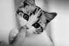 【猫好き必見】一人暮らしで猫を飼うにはどうすればいいの?