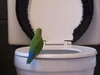 あなたのおうちのトイレをオシャレにするDIY
