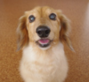 シェアハウスにいた犬を飼うことになった話と、その犬の超能力の話